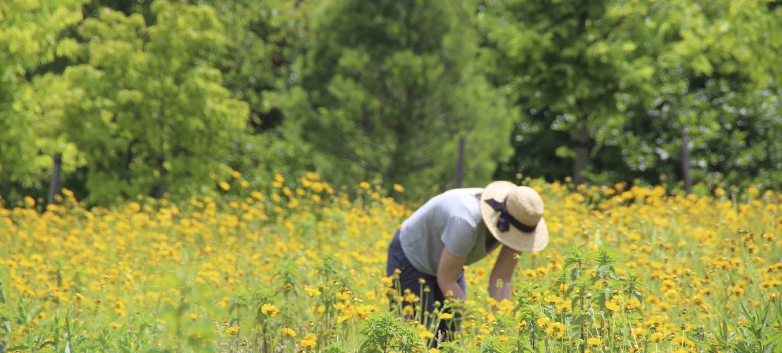Mahan Rykiel performing meadow research