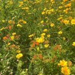 Meadow at Mahan Rykiel Project